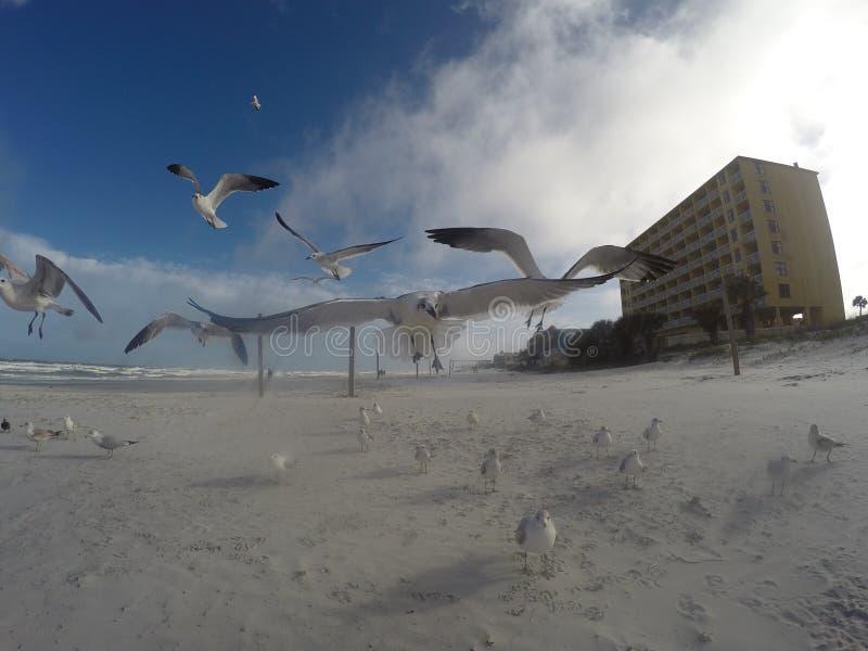 Vol de mouette près d'appareil-photo photo stock