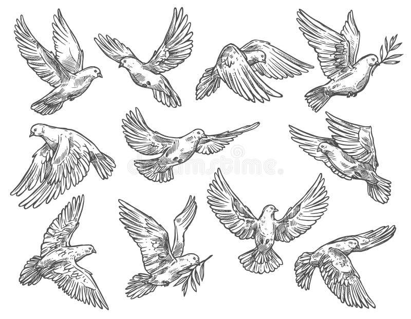 Vol de pigeon avec la branche d'olivier, croquis de vecteur illustration libre de droits