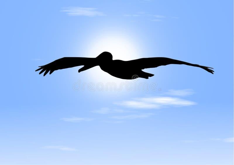 Vol du pélican - oiseau paisible dans le ciel illustration stock