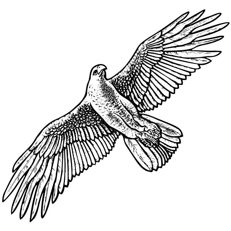Vol Eagle illustration libre de droits