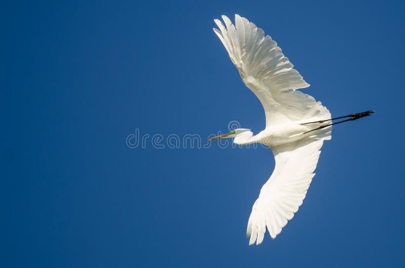 Vol grand de héron dans un ciel bleu image libre de droits