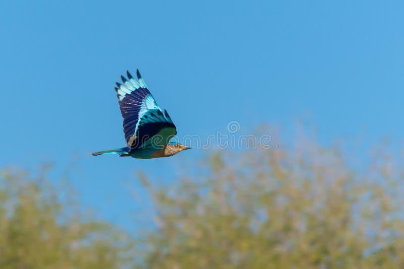 Vol indien de rouleau par le ciel photographie stock libre de droits