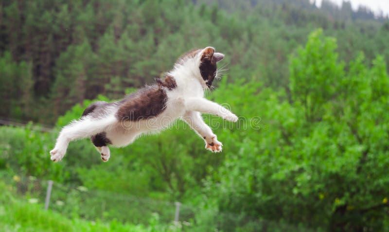 Vol mignon de chat et sauter dans la nature photographie stock libre de droits