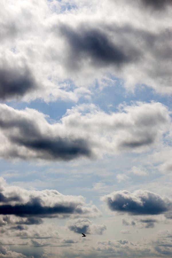 Vol solitaire d'oiseau dans le ciel photos stock