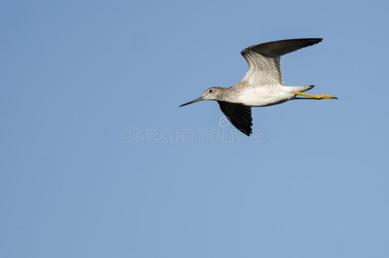 Vol solitaire de bécasseau dans un ciel bleu images stock