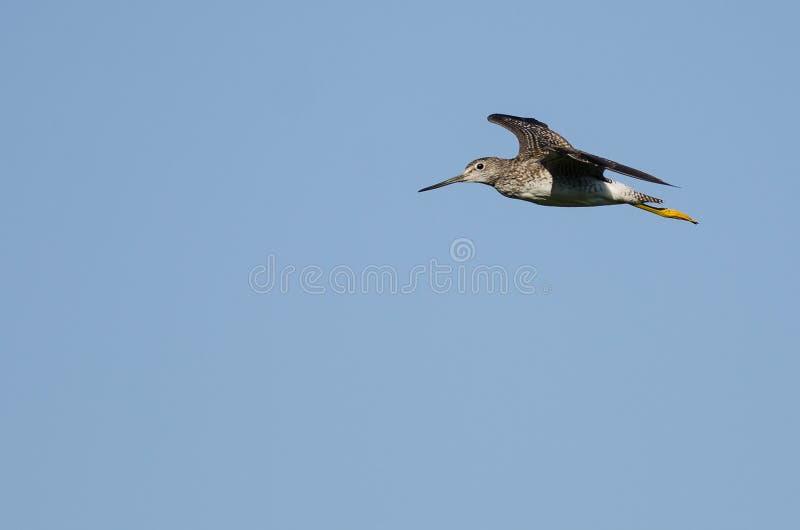 Vol solitaire de bécasseau dans un ciel bleu photo stock