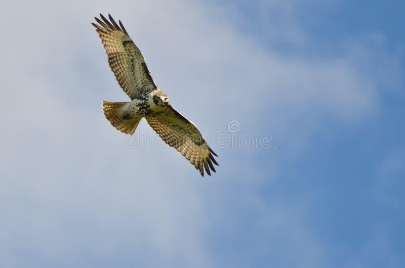 Vol suivi rouge de faucon dans un ciel bleu photos libres de droits