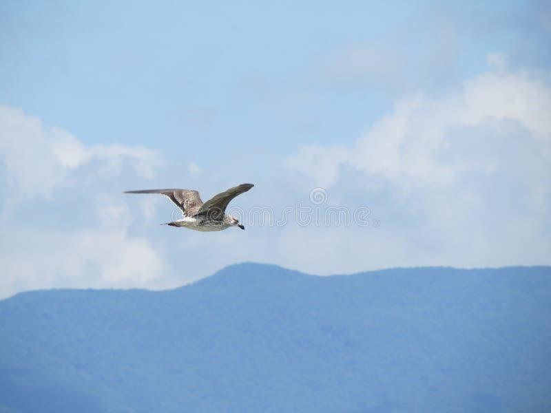 Volando il bello giorno fotografia stock libera da diritti