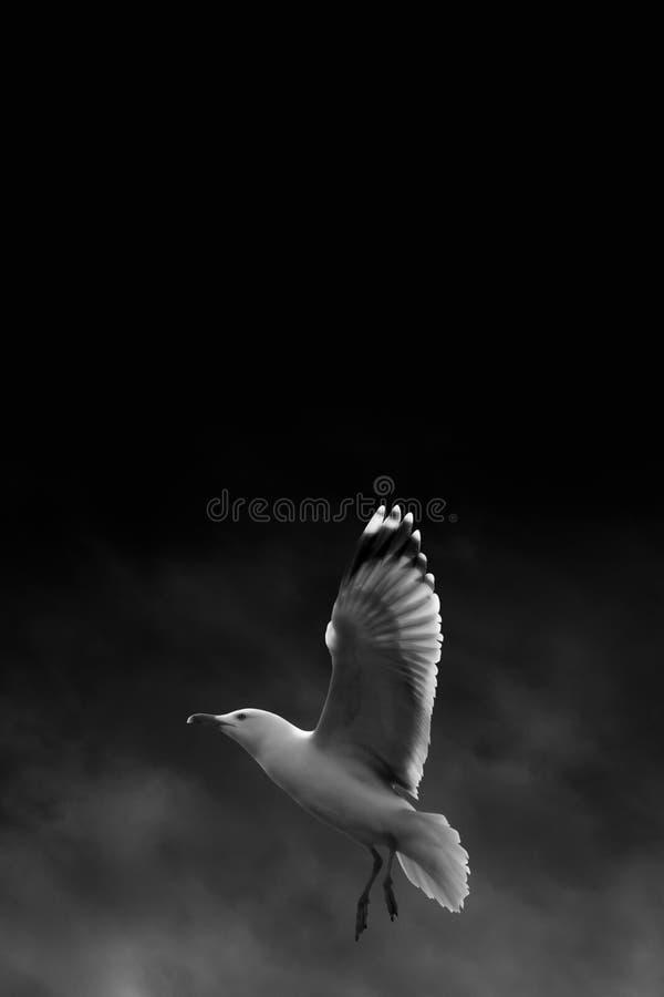 Volando nello scuro immagini stock libere da diritti