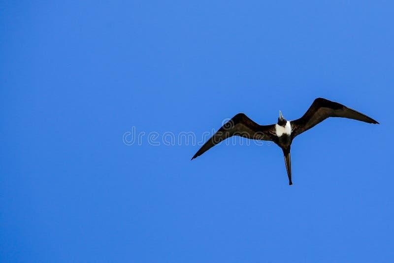 Volaré en el cielo infinito fotos de archivo