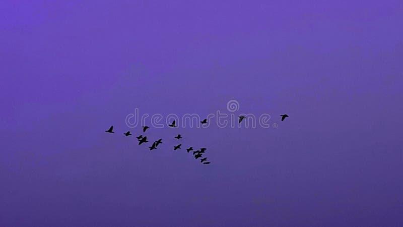 Volata degli uccelli immagine stock libera da diritti