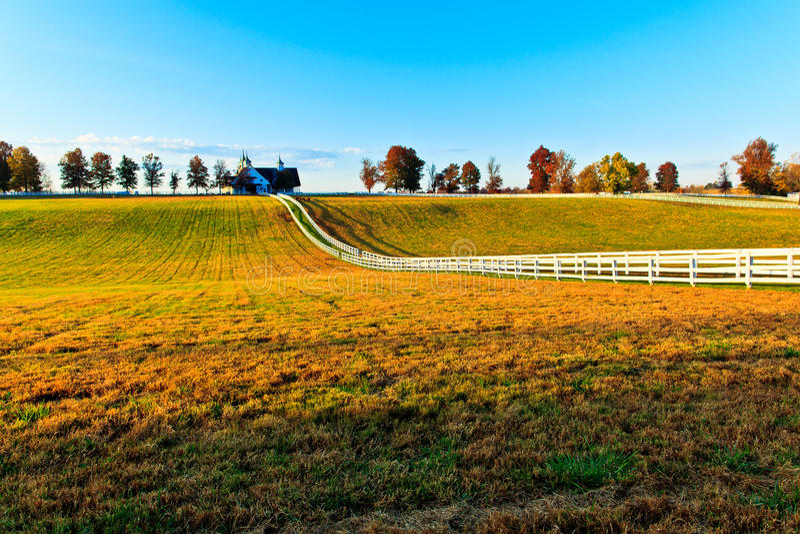 Volbloed- het Paardlandbouwbedrijf van Kentucky royalty-vrije stock afbeelding