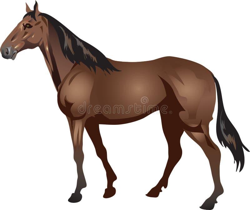 Volbloed- Paard, Stalion-Galop, Dier - Vectorillustratie stock illustratie