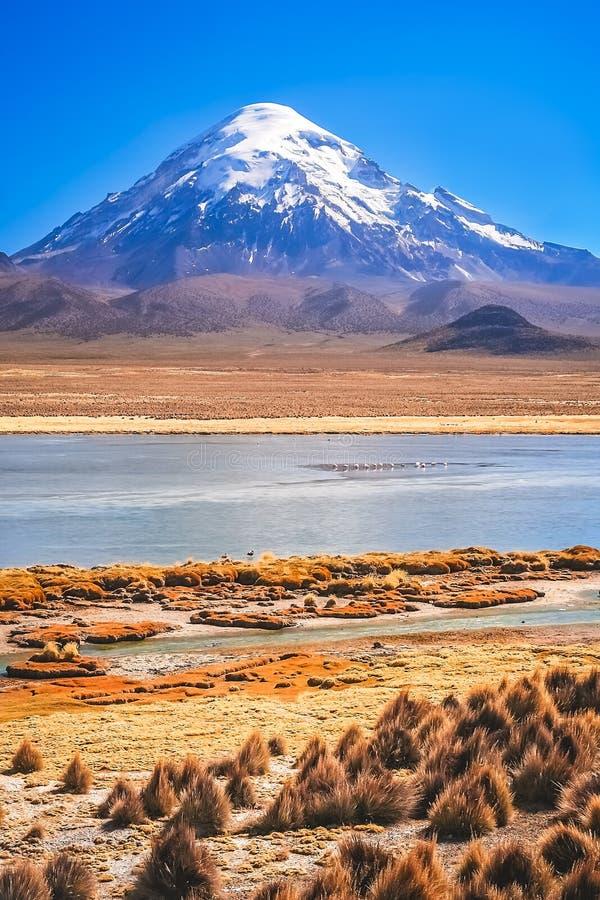Volcán coronado de nieve majestuoso de Nevado Sajama en Bolivia imagenes de archivo