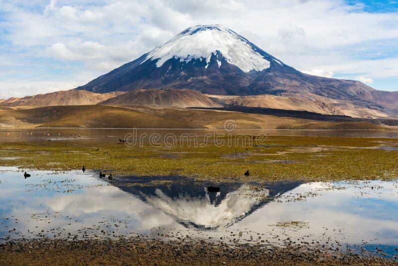 Volcan de Parinacota et lac Chungara (Chili) photo libre de droits