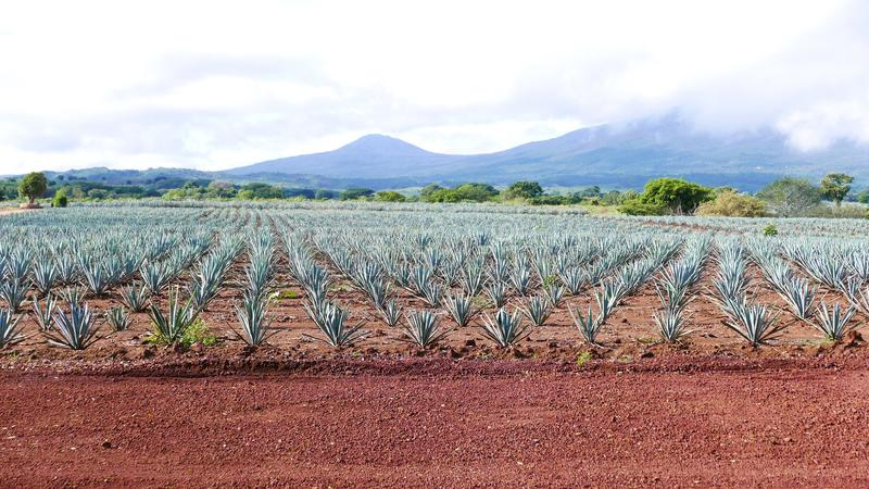 Volcan de Tequila in Mexico. TEQUILA-MEXICO-SEP 26, 2017: Standing at a height of 2,920 meters above sea level, The Tequila Volcano, or Volcan de Tequila is a royalty free stock photos