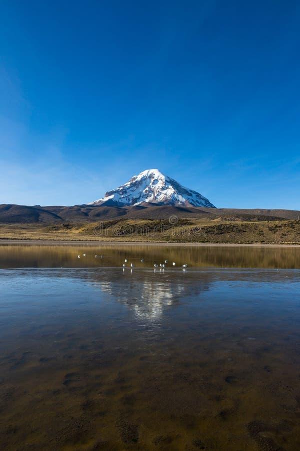 Volcan et lac Huaynacota Sajama La Bolivie andine photo libre de droits