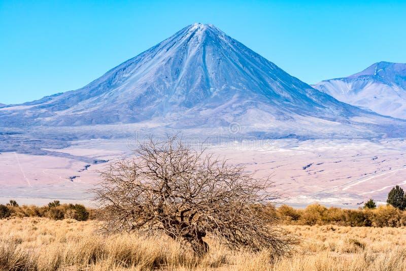 Volcan Licancabur и славное дерево стоковые изображения rf
