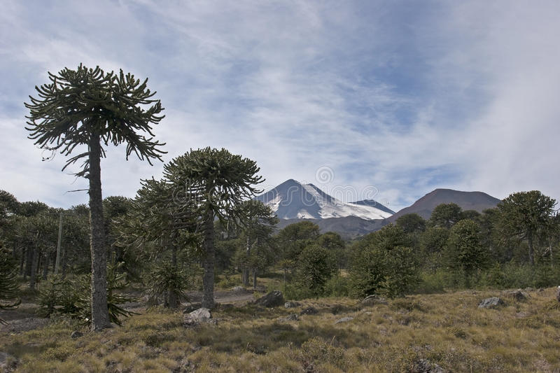 Volcan Llaima in Conguillo nacional park, Chile stock photo
