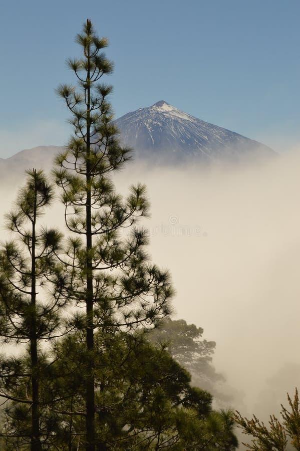 Volcan Teide και κανάρια πεύκα στο νησί Tenerife, Ισπανία στοκ φωτογραφία με δικαίωμα ελεύθερης χρήσης