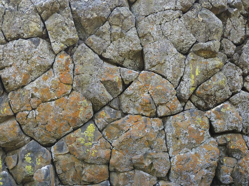 Volcanic Basalt Wall Covered with Colorful Fungus royalty free stock photo