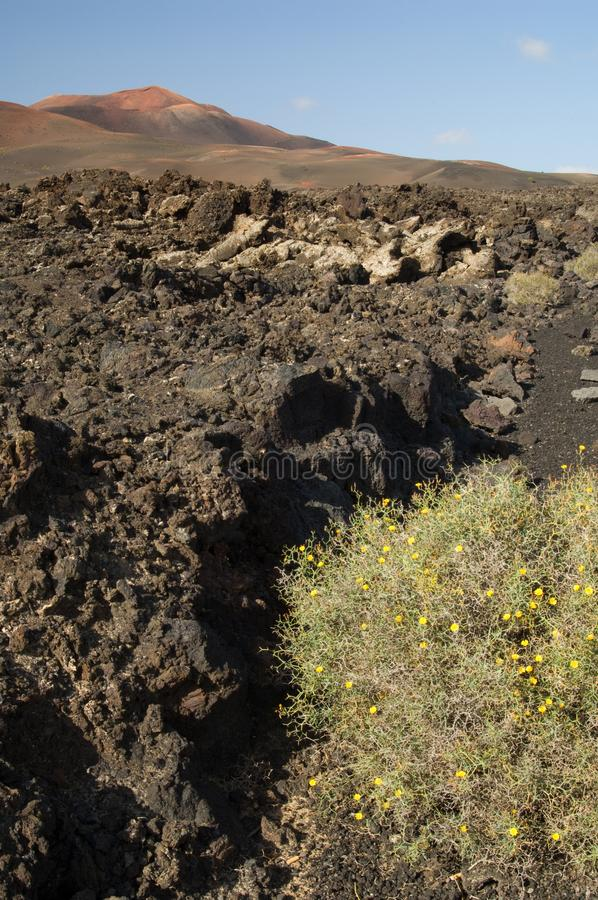 Volcanic landscape in the Timanfaya National Park. stock photos