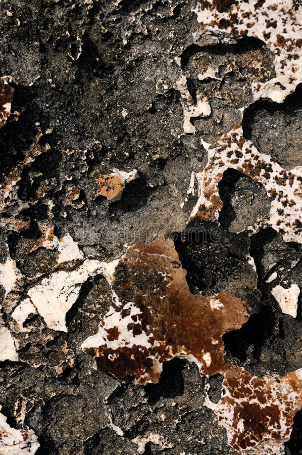 Download Volcanic Rock Texture stock photo. Image of close, background - 20944466