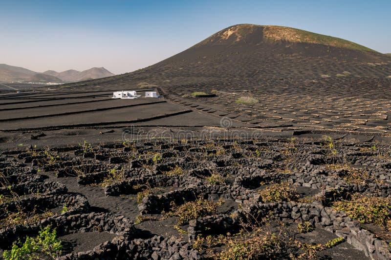 Volcanic vineyards of Lanzarote, Spain stock photos