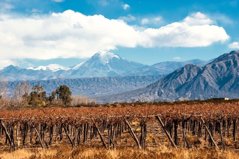 Volcano Aconcagua en Wijngaard, Argentijnse provincie van Mendoza stock fotografie