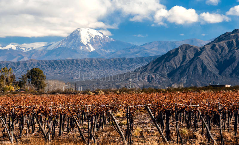 Volcano Aconcagua and Vineyard, Argentine royalty free stock photography