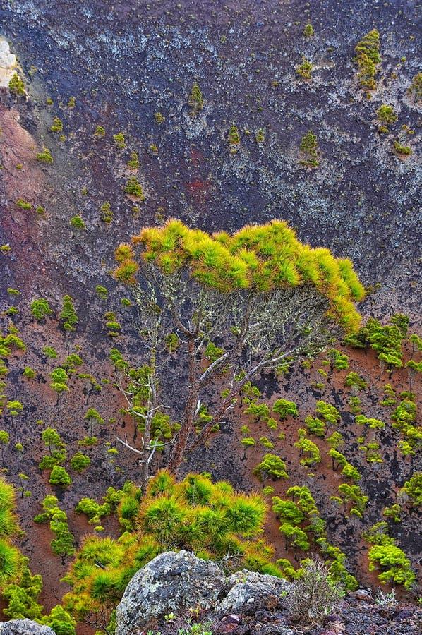 Volcano de Teneguia. Canary, Spain royalty free stock image