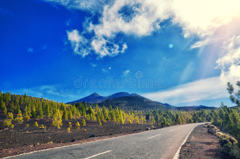 Volcano El Teide, Tenerife National Park. Pine forest and road across lava rocks in El Teide National park. stock image