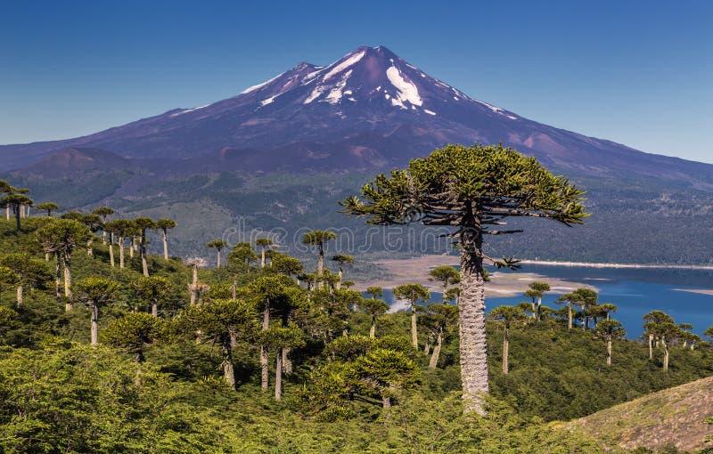 Volcano Llaima - Chile arkivbild