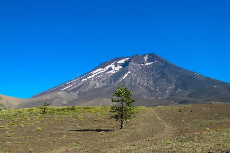 Volcano Lonquimay no Chile fotografia de stock