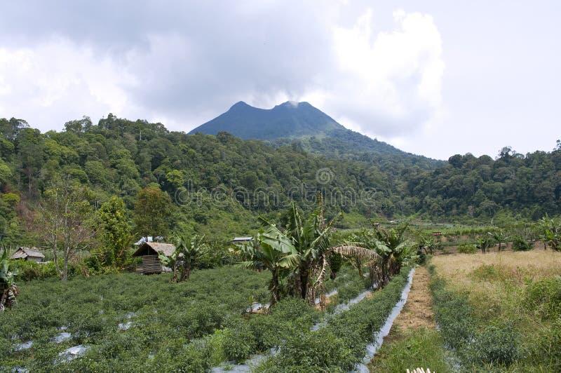 Volcano Mount Sinabung stock photo