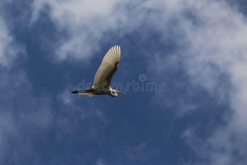 Voler au-dessus des nuages images libres de droits