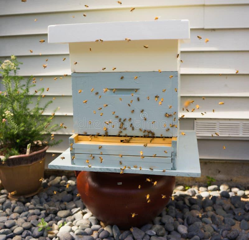 Voler d'abeilles photo stock
