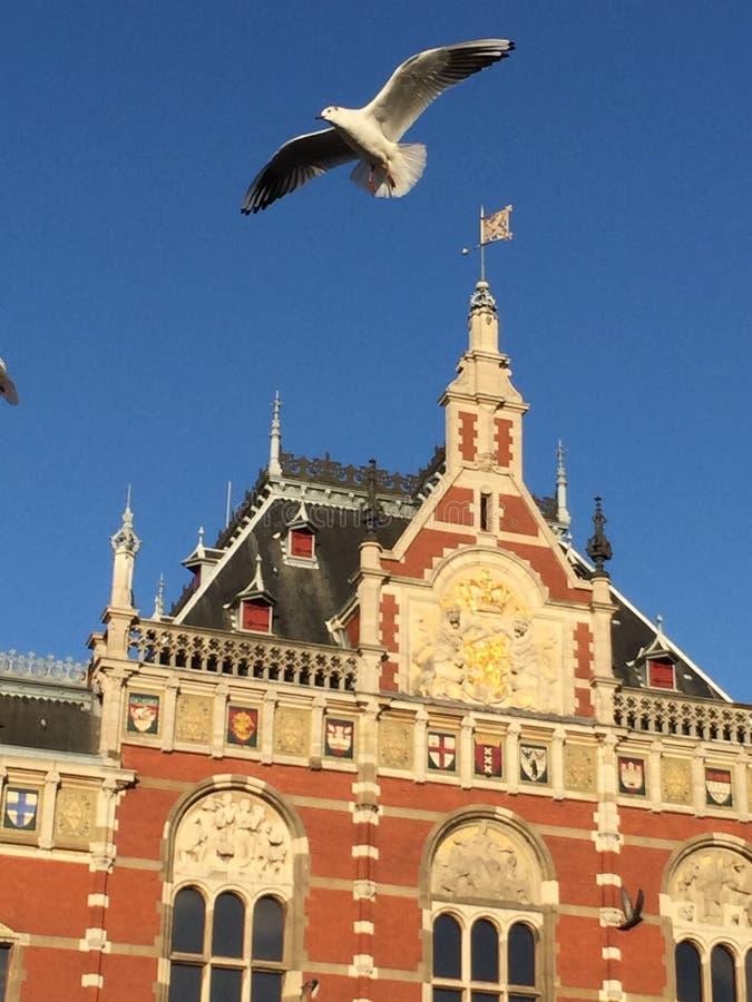 Voler d'oiseaux d'Amsterdam image stock
