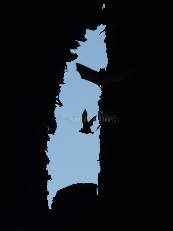 Voler dans la caverne de batte photographie stock