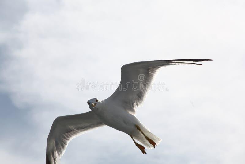 Voler dans le ciel bleu photos libres de droits