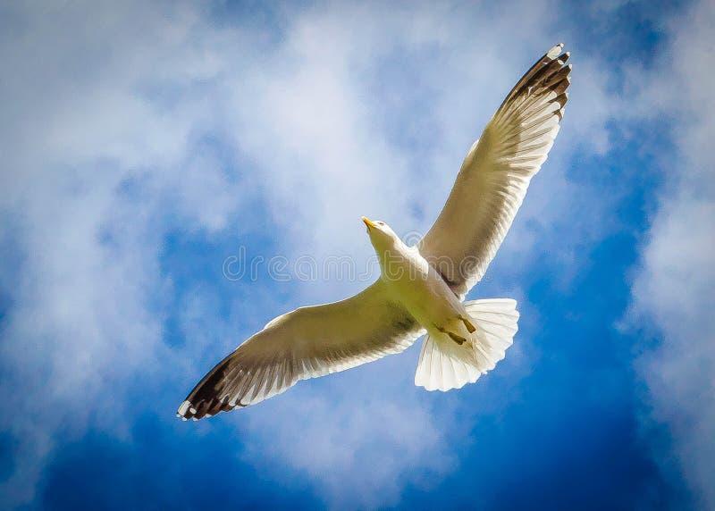 Voler haut en haut images libres de droits