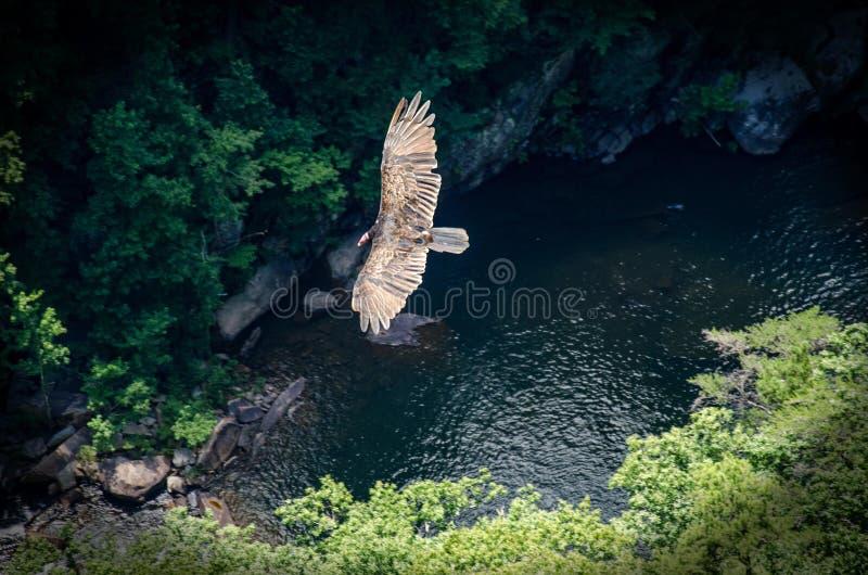 Download Voler plus haut photo stock. Image du phase, birding - 77154570