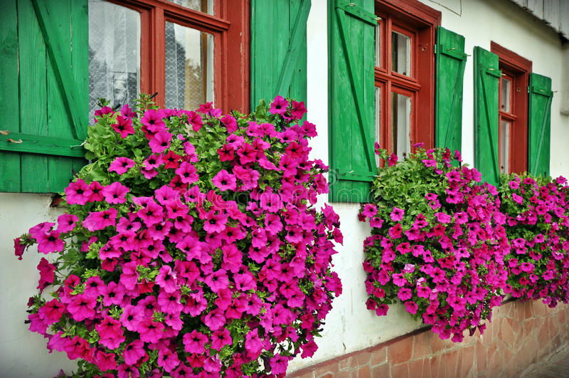 Volets fleuris images stock