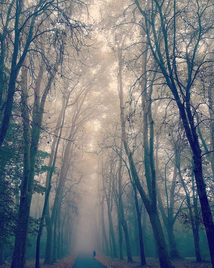 Volg de weg van uw ziel stock foto's