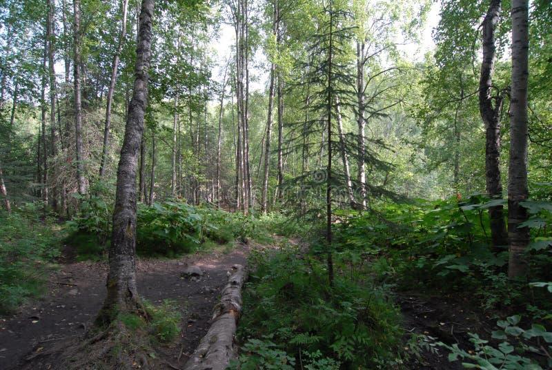 Volg dode login het bos stock foto's