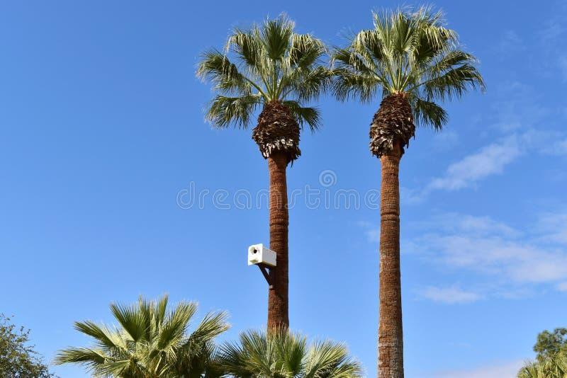 Volière étonnant grande sur un palmier majestueux images libres de droits