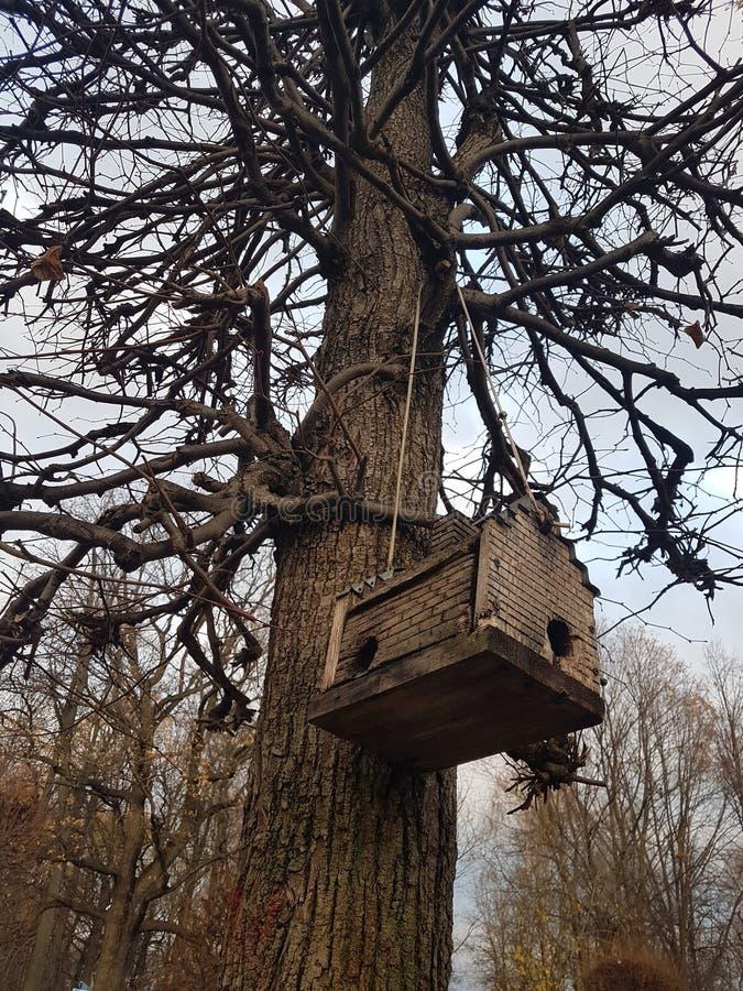 Volière en bois, sur un arbre pendant l'automne, dans le style de la maison Amsterdam, en Russie dans le domaine Kuskovo images stock