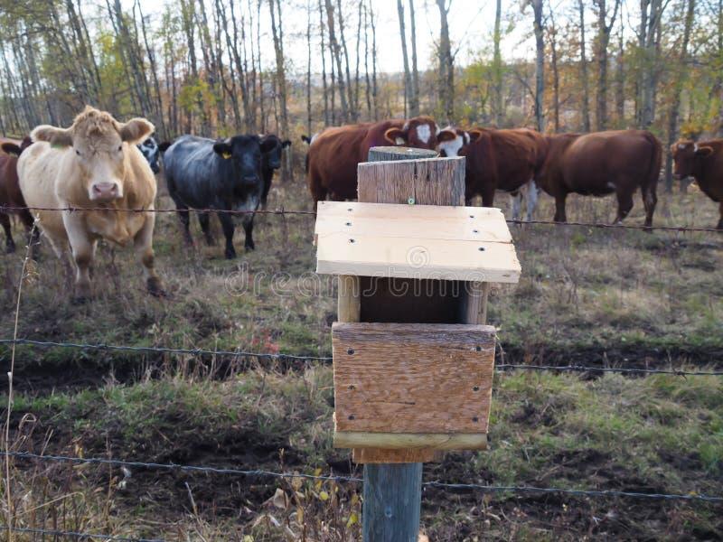 Volière faite maison dans le domaine de pays avec des bétail photographie stock