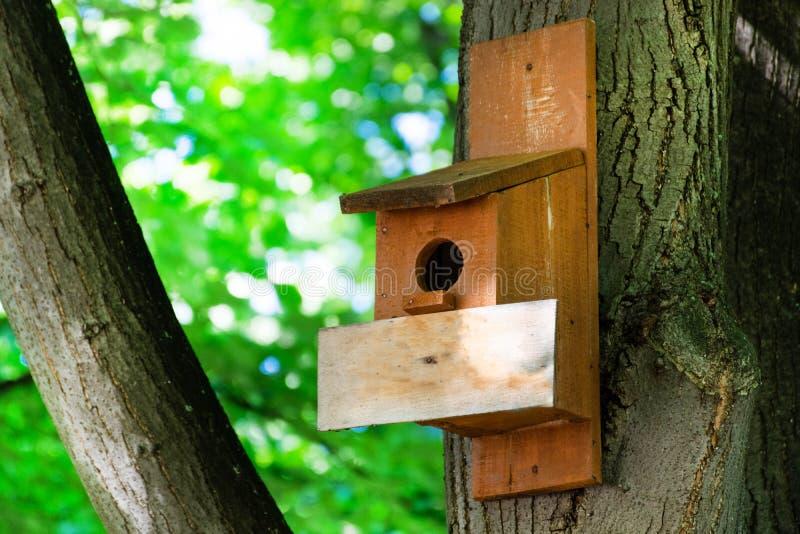 Volière sur un arbre dans Forest Park la journée de printemps, abri en bois de main pour des oiseaux photos libres de droits