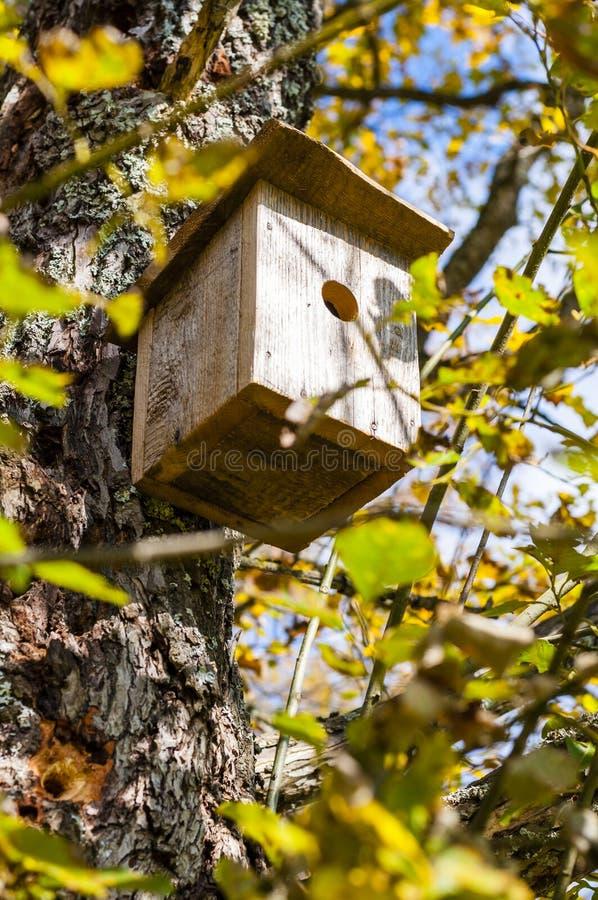Volière traditionnelle accrochant sur l'arbre à feuilles caduques dans la forêt photographie stock libre de droits